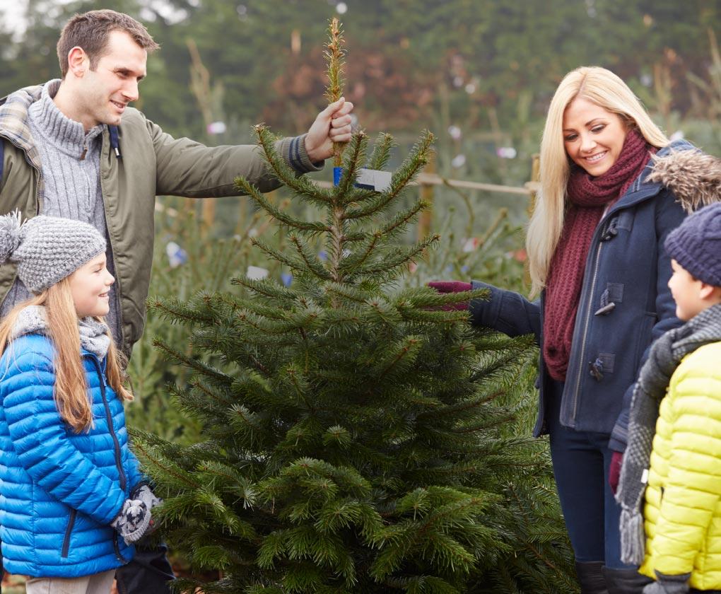 Sapins Latour - offre de sapins de Noël pour les particuliers